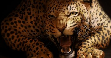 National Animal of Brazil: Jaguar