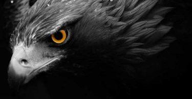 National Animal of Germany: Eagle
