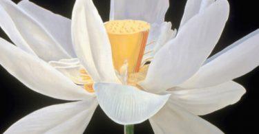india national flower
